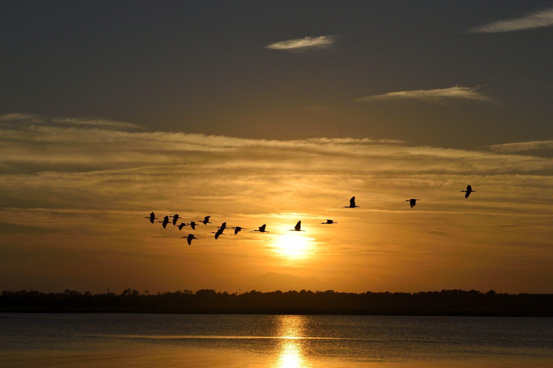 birds flying